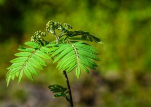 planting trees to lower carbon in the atmosphere