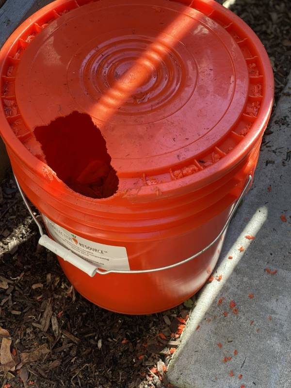 protect your compost bucket from squirrels